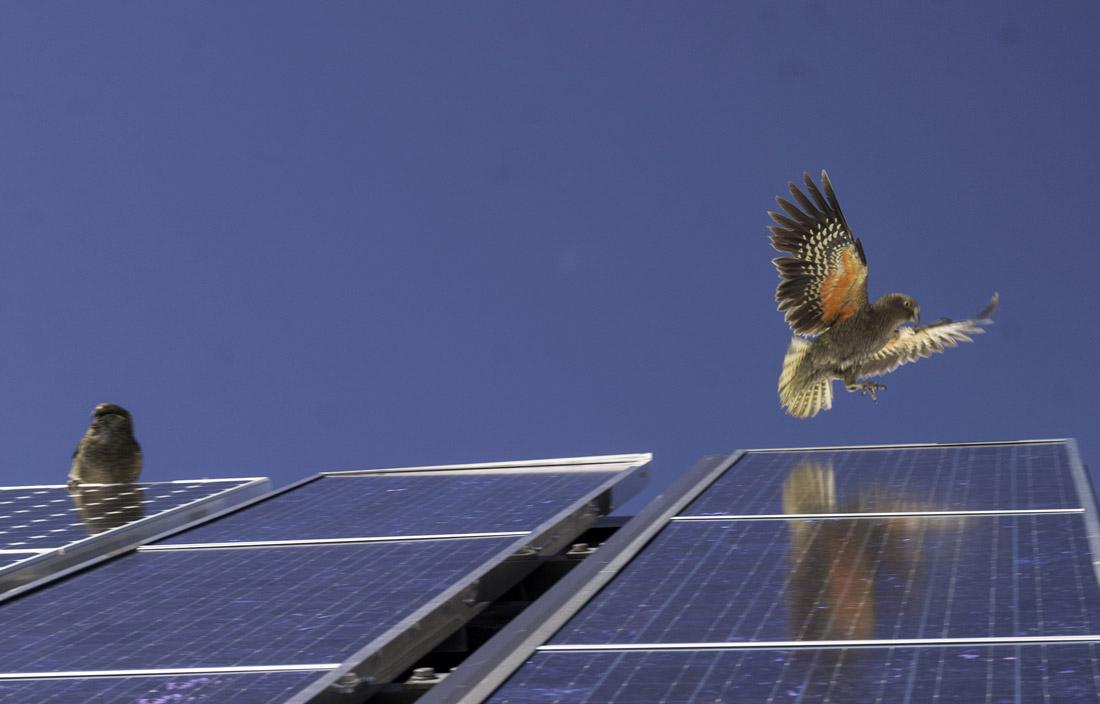 Solar Kea