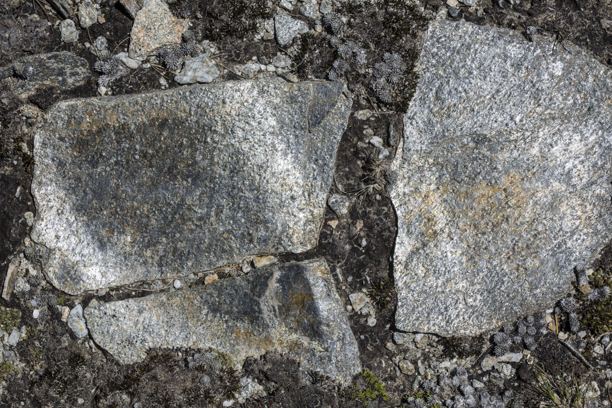 Schist fragments at Whare Kea Chalet